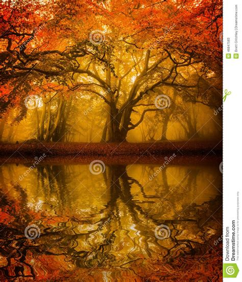 falling on tamarind trees a travelogue of books autumn fall tree refelction stock photo image 46847583