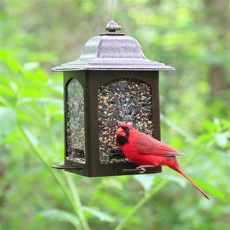 Outside Bird Feeders Birdscapes Tulip Garden Lantern Bird Feeder
