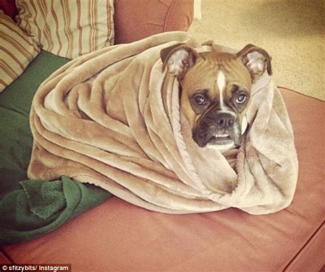 puppy burrito a cat burrito anyone go ahead wrap your purring friend up in a towel it may be