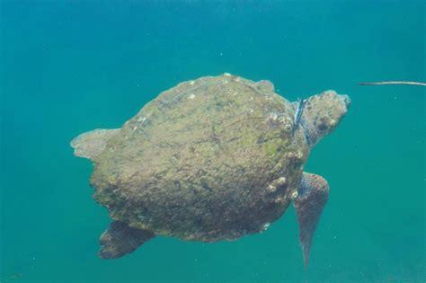 Turtle Fishing Lure here comes treble wildlifesense