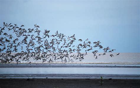burung air   disensus mongabaycoid