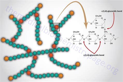 carbohydrates glycogen carbohydrates carbohydrates glycogen
