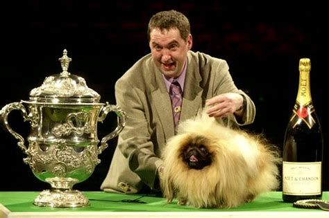 best in show five crufts dogs candis