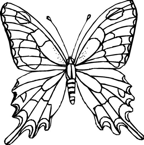 free butterfly coloring pages white butterfly coloring pages to print