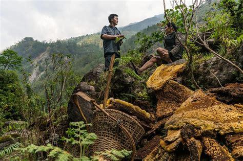Shoo Himalaya Di Guardian el viaje suicida para recolectar miel alucin 243 gena en nepal info taringa