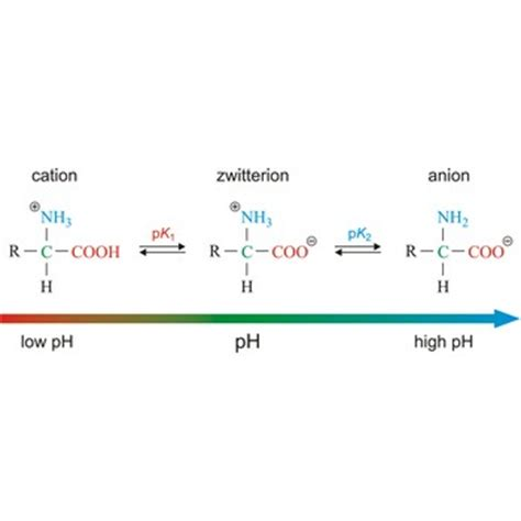 protein zwitterion zwitterion chemistry dictionary glossary