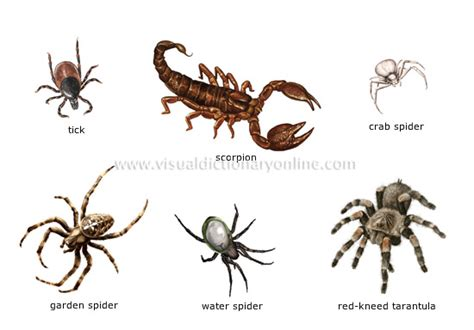 species of arachnida and myriopoda scorpions spiders mites ticks and centipedes injurious to classic reprint books arachnids facts for