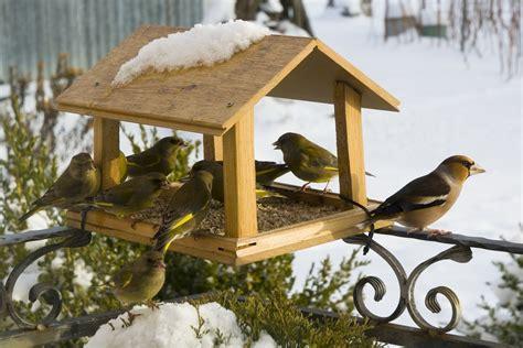Cool Bird Feeders Stick On Bird Feeder Unique Bird Feeder