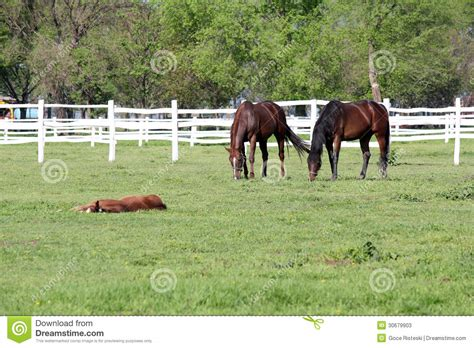 horse corral stock photos horse corral stock images alamy horses grazing in corral stock photos image 30679903