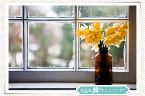 On The Windowsill pretty photo post daffodils on the windowsill burlington nc photography luck photography