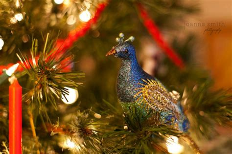 how to successfully photograph your christmas tree
