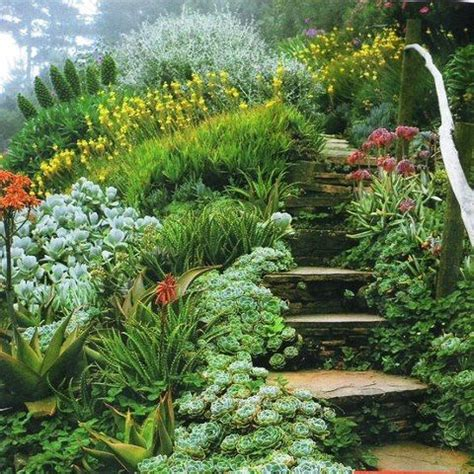 Hill Gardens gardens plants and drought tolerant plants on