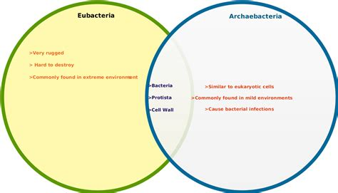 archaebacteria vs eubacteria venn diagram diagram venn diagram of bacteria and archaea