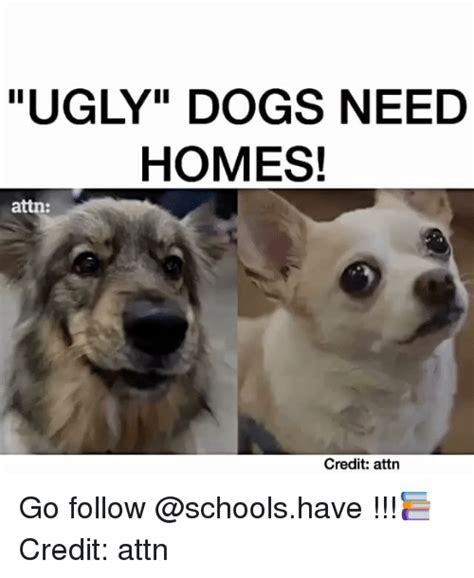 Ugly Dog Meme - 25 best memes about attn attn memes