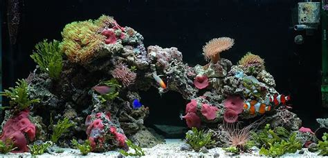 live rock aquascaping ideas aquascape live rock thread topic of the week september