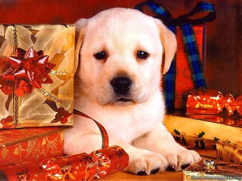 christmas wallpaper with dogs 40 wallpapers and pictures of dogs