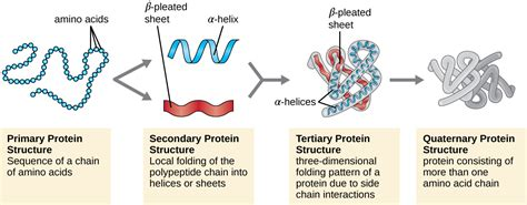 4 protein structure and function proteins textbook chapters alyvea