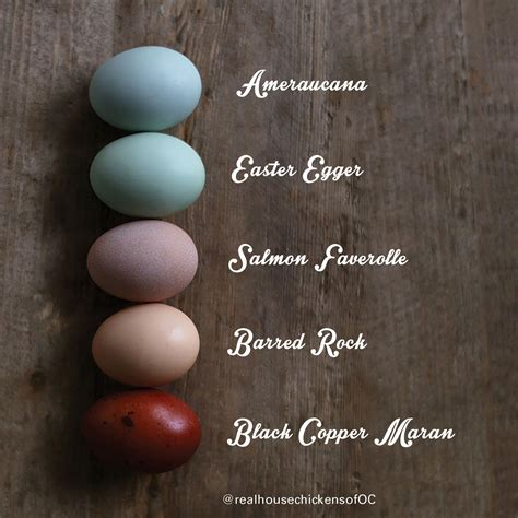 chicken egg colors egg colors and breeds portlandchickens awesome