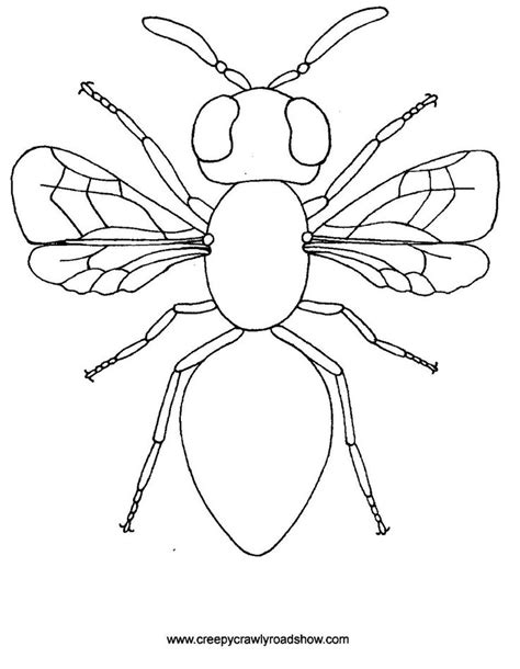 creepy crawlies show colouring pages arts crafts