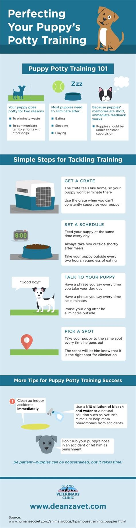 puppy bathroom schedule 1000 ideas about puppy toilet training on pinterest