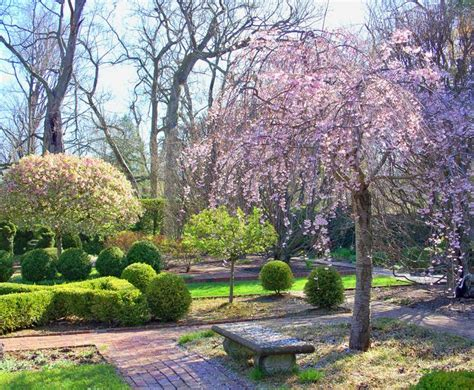 Ashland Gardens by 17 Best Images About Kentucky History Horses And Hooch