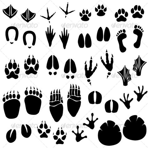 printable animal footprint matching game animal footprint track vector by leremy graphicriver