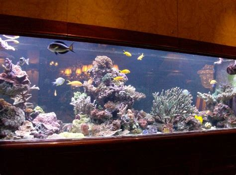 Guest Bathroom Design Ideas Beautiful Fish Tank Picture Of Hotel Estherea Amsterdam