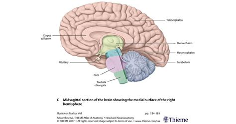 midsagittal section of the brain diagram ica 4 lecture 6 at washington university in st louis