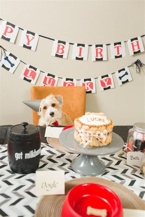 Birthday Surprises For Your Pet by 5 Birthday Better Than Yours Healthy Paws