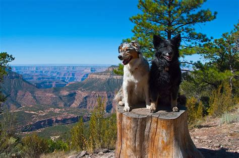 are dogs allowed in national parks 10 national parks you can explore with your matador network howldb