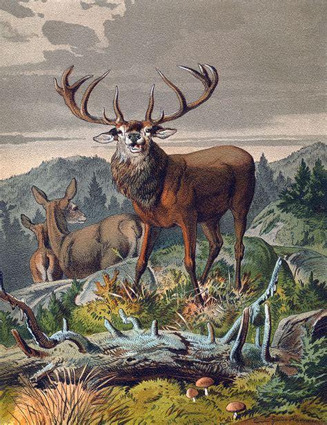 j germeister dekor bild mit hirsch naturnahes bild mit hirsch auf der wiese