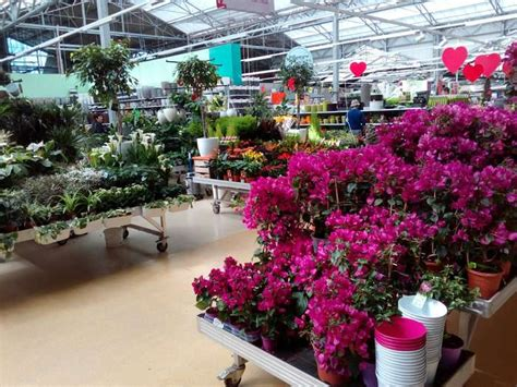 Garten Pflanzen Center Berlin by Bilder Und Fotos Zu Pflanzen K 246 Lle Gartencenter Dahlwitz