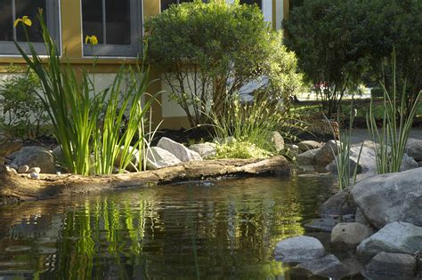 pond aquascape certified aquascape contractors ponds done right