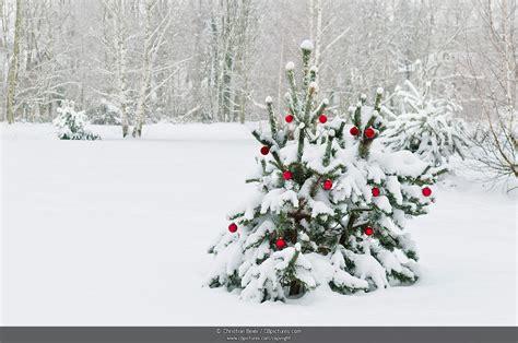 foto geschmueckter weihnachtsbaum im schnee cbpictures