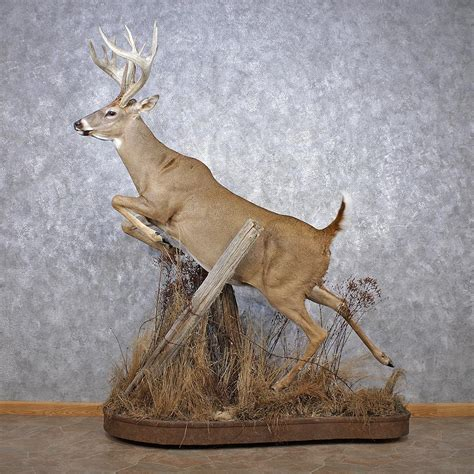 Animal Figurines Home Decor by Whitetail Deer Mount For Sale 12510 The Taxidermy Store