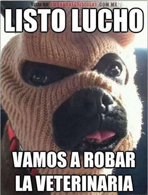 imagenes graciosas lucho memes graciosos de lucho el perro fondos wallpappers
