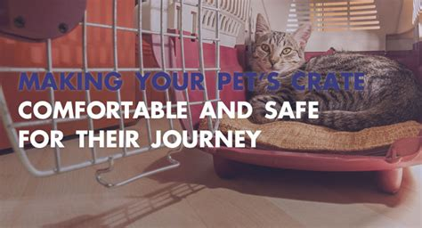 How To Make Crate Comfortable by Your Pet S Crate Comfortable And Safe For Their Journey