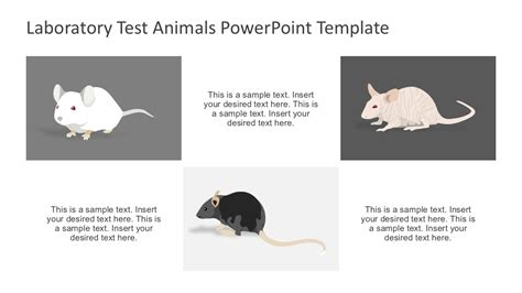 rat animal scientific testing powerpoint slidemodel