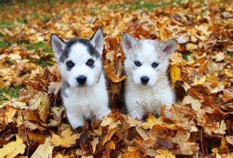 fall puppies fall puppies puppy lovin