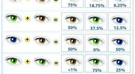 eye color predictor chart genetic eye color predictor chart helps if working with