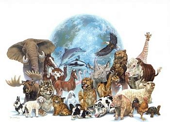 Where All The Animals by Bloodthirsty Animal Best All Animals Pictures