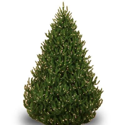 home depot real christmas tree shop all types of real trees the home depot