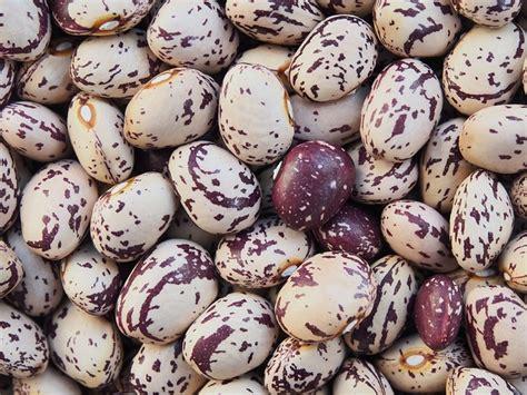come cucinare i fagioli borlotti secchi fagioli borlotti propriet 224 benefici