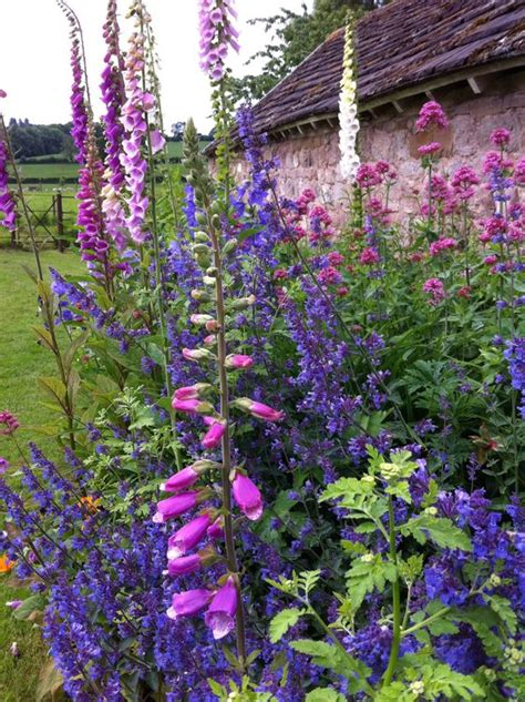 country garden flowers country garden foxgloves and salvia by the