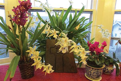 how to make orchids reflower organic gardening mother