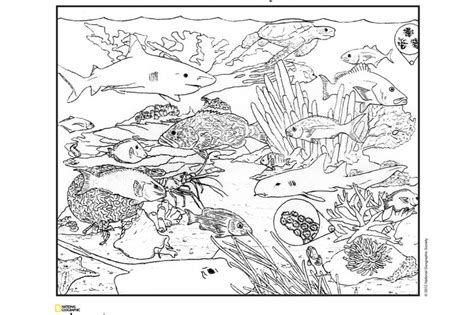 Ecosystem Coloring Pages Food Chain Coloring Page Photos Ecosystem Coloring Pages