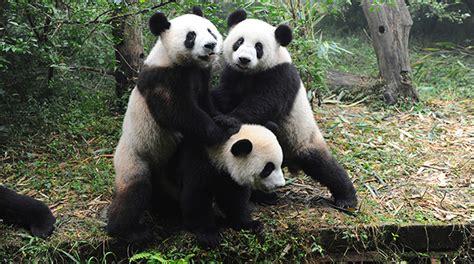 imagenes los animales en peligro de extincion 15 animales en peligro de extinci 243 n taringa