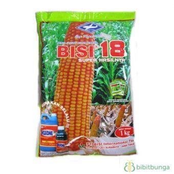 Jual Bibit Jagung Bisi 18 benih kapal terbang jagung bisi 18 1 kg jual tanaman