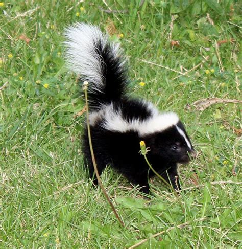 Are Skunks Blind adorable baby animal pictures part 2 animals zone