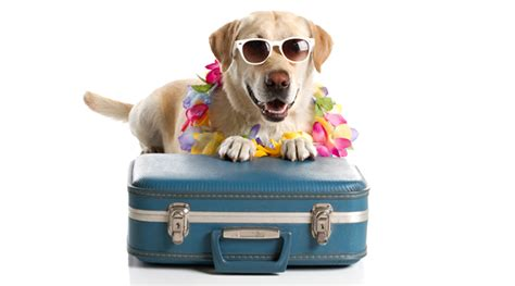 Vacation Pet Pet Pet Product by Going On With Your Animalblog